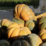 L'agriculture meyrinoise: un patrimoine en danger