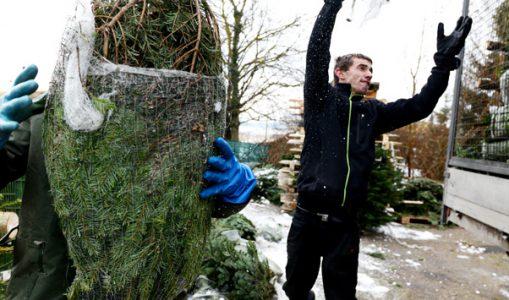 En décembre à Genève, les sapins courent les rues