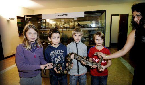 Pas de morsures mais «de vrais mordus» à l'école des reptiles