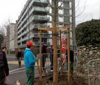 Carouge: les arbres nouveaux sont arrivés