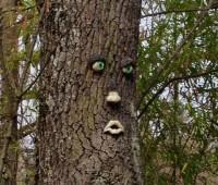 A Collonge-Bellerive, un arbre boude le printemps