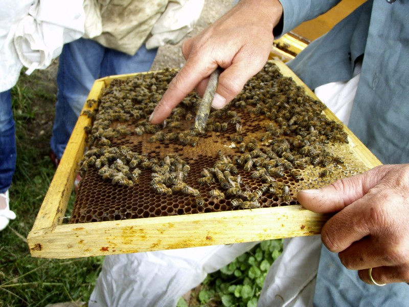 Des fleurs pour des abeilles