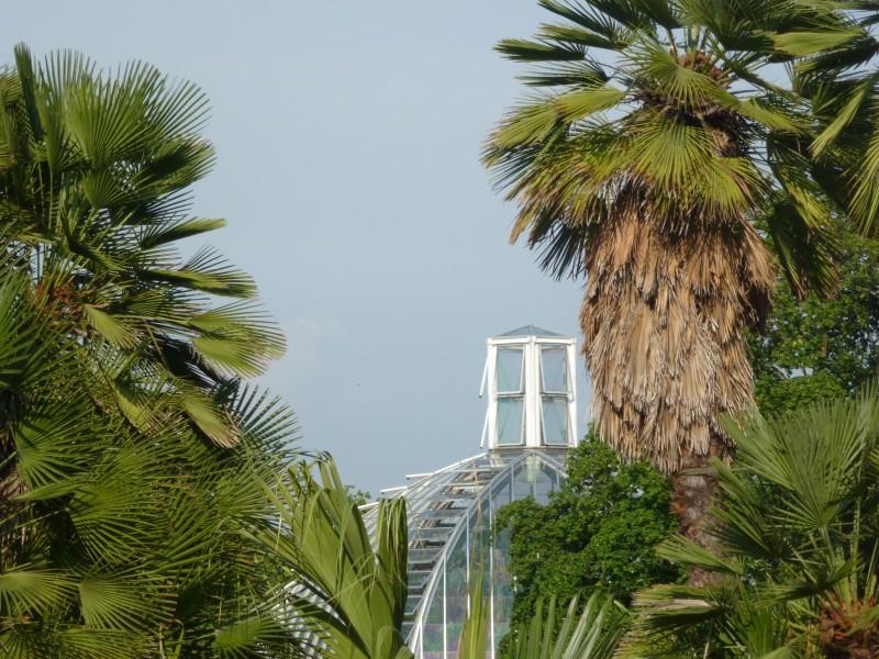 Visite commentée de l'expostion Palmes & Co