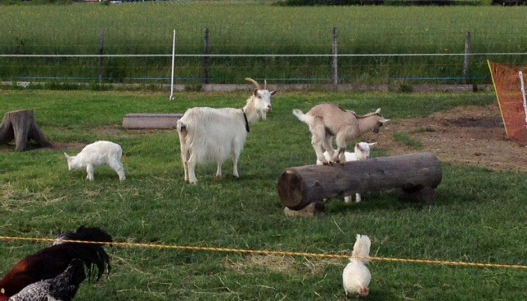 A la découverte des animaux de la ferme