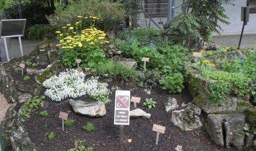 Les rocailles historiques du parc Floraire reprennent des couleurs