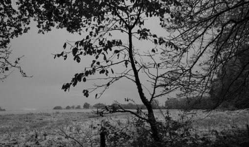 Balade hivernale