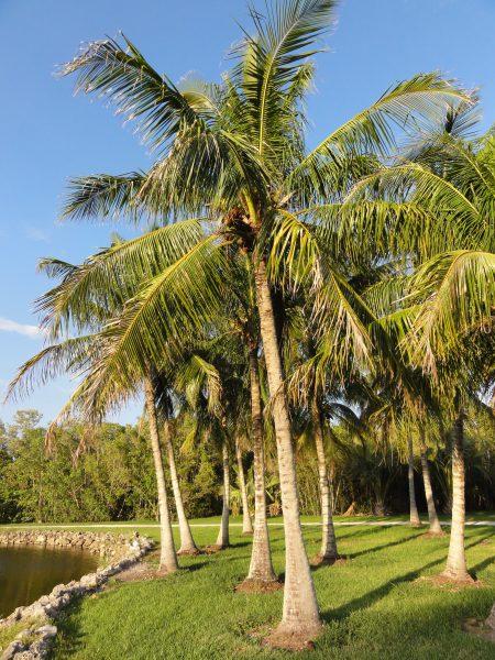 Palmes & Co