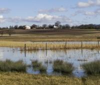 Marais de Sionnet, petit paradis dans la campagne genevoise