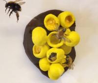 Une expo pour sensibiliser au déclin des abeilles sauvages