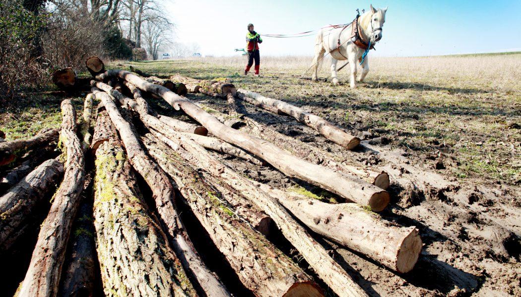 Tracter le bois à la force du cheval
