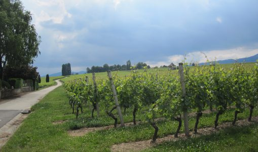 Balade au paradis des vignes