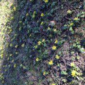 Annonce florale