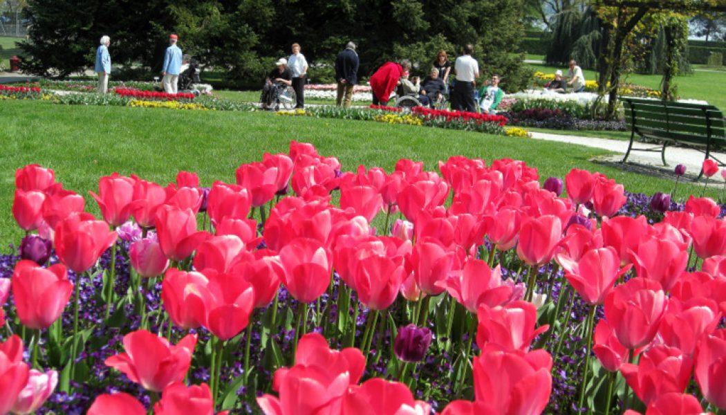 33. Balade au Jardin Botanique parmi les tulipes en fleur