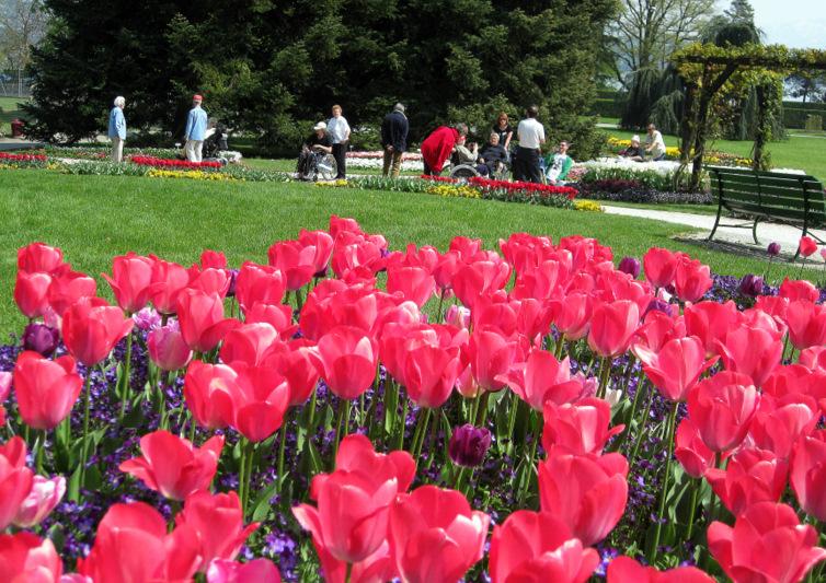 33 balade au jardin botanique parmi les tulipes en fleur for Jardin botanique ouverture 2015