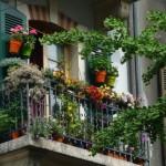 Aux balcons et au bas des ginkgos, les habitantes de la rue Caroline ont planté des fleurs : Photos Ana Andrade