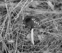 Ballade mycologique