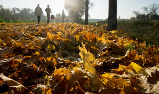 Promenade «printanière» aux couleurs d'automne