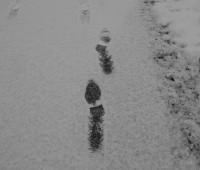 Promenade enneigée.