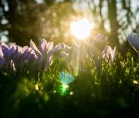 21 février 2016 – premier jour du printemps !
