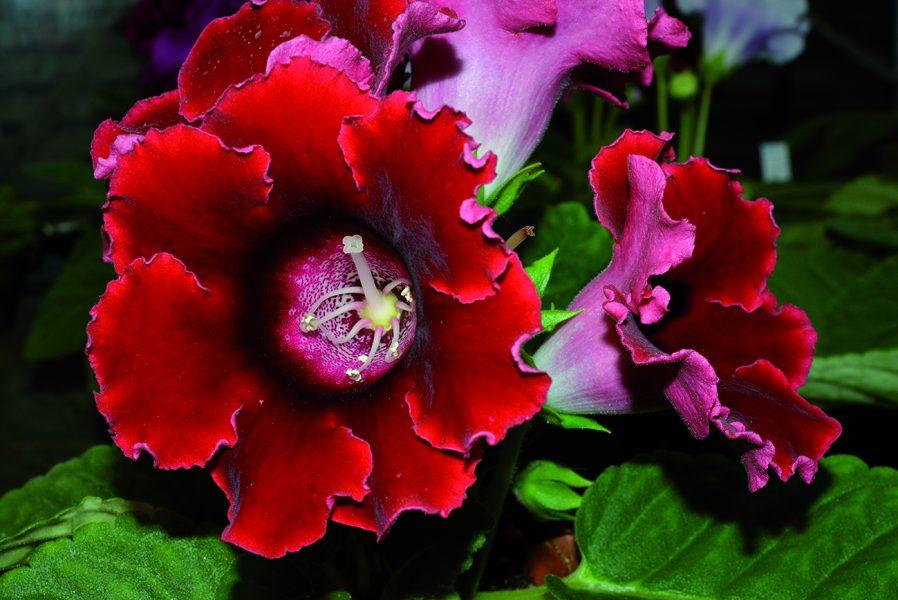 Les Variations botaniques