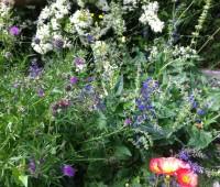 Une multitude de fleurs sauvages Rue de la Débridée. © Maryelle Budry