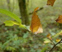 Couleur d'automne dans le mandement