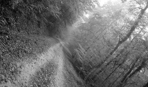 Promenade brumeuse au bois de la Fioule (Russin et Satigny)