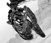 L'étonnante expo sur les dinosaures