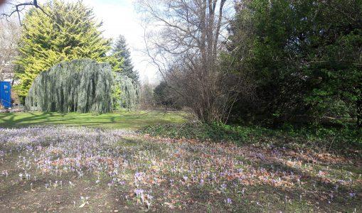Jardin botanique alpin de Meyrin