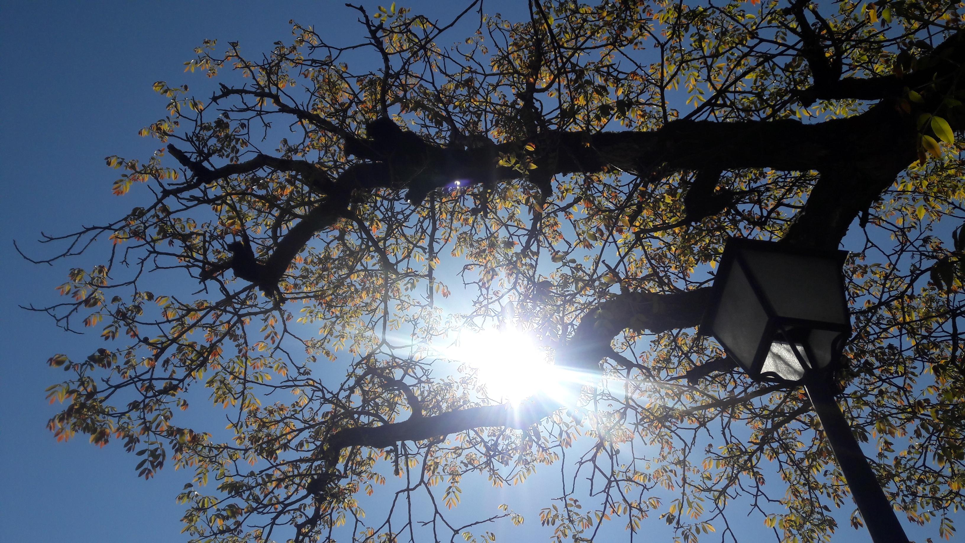 Le soleil à travers les jeunes feuilles