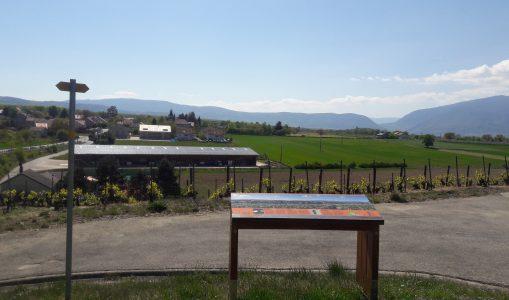 Un panorama dans les vignes