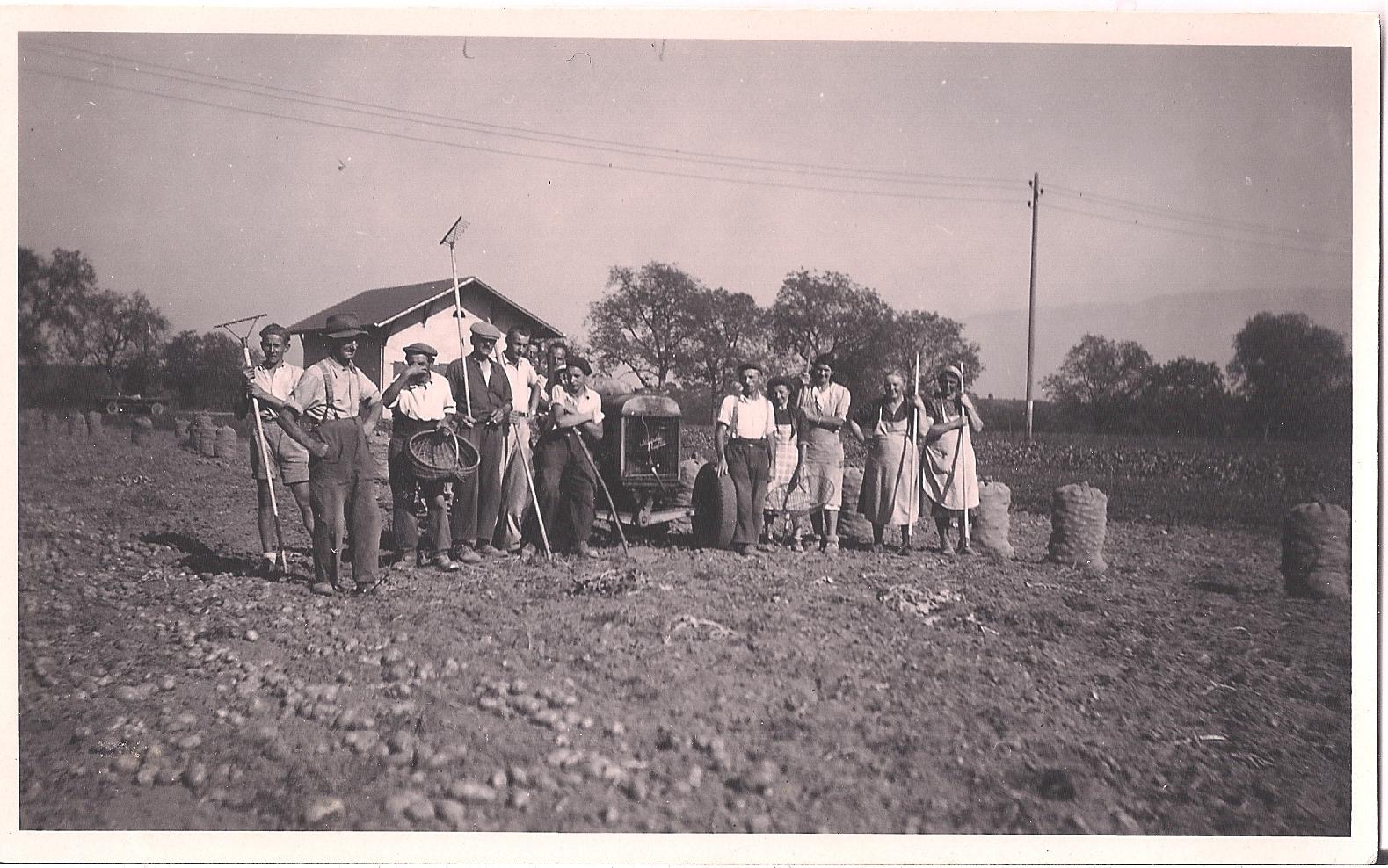Récolte des patates à Soral, photographie du facteur Fontaine, 1937