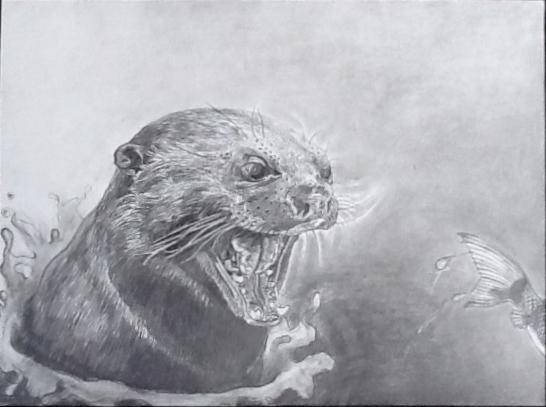 Loutre gourmande Graphite sur papier  28 x 36 cm (encadré 34 x 41 cm) Gisèle Bryers