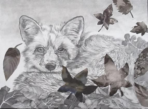 Renard paisible Graphite sur papier 28 x 36 cm (encadré 34 x 41 cm) Gisèle Bryers