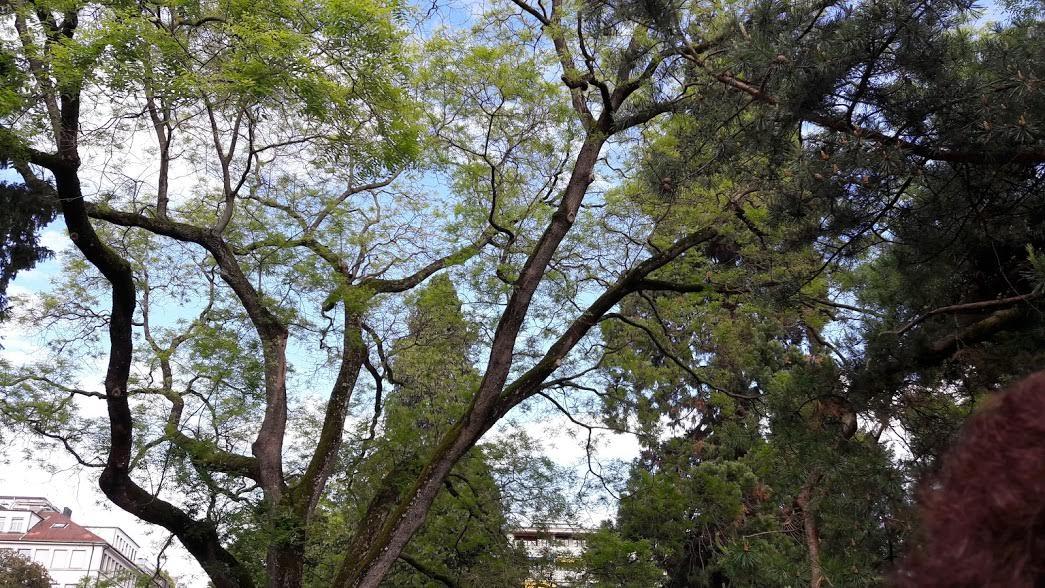 Les arbres du  cimetière des Rois © M-A Ciprut