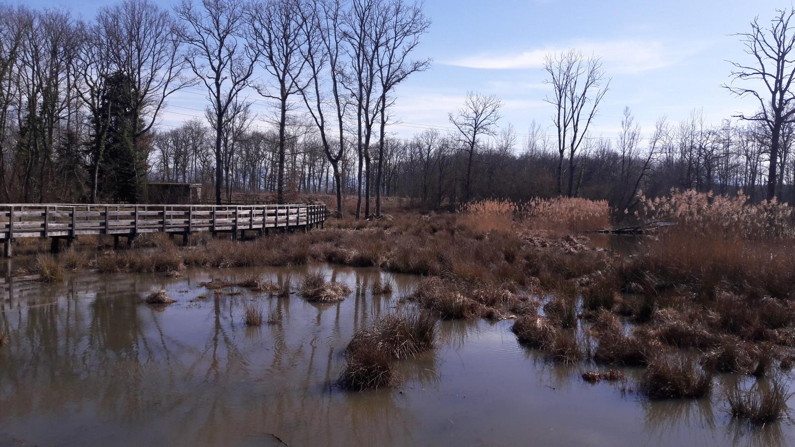 Les étangs des Douves