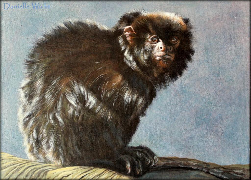 Georges (Tamarin) Acrylique sur toile  30 x 40 cm (encadré 40 x 50 cm) Danielle Wicht