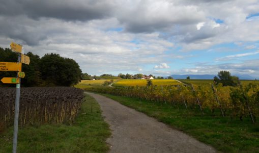 Promenade «Les vignes en automne»
