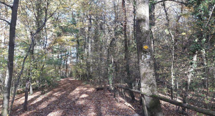 Promenade «les feuilles mortes de l'automne»
