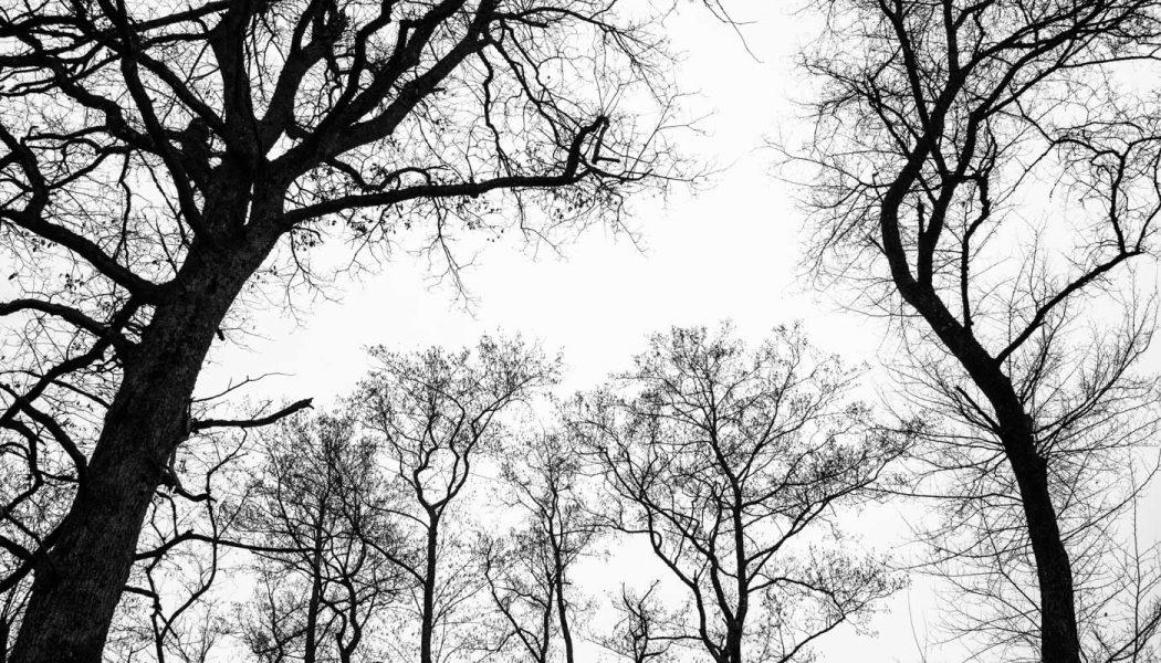 Les arbres tentaculaires des Bois de Jussy