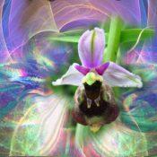 Balades en orchidées