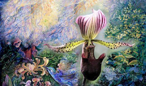 Le monde merveilleux des Orchidées