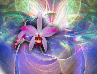 Laleia, une orchidée du Brésil