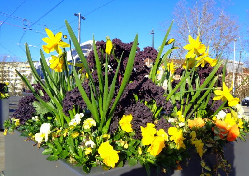 Bel arrangement fleuri Place de l'Octroi