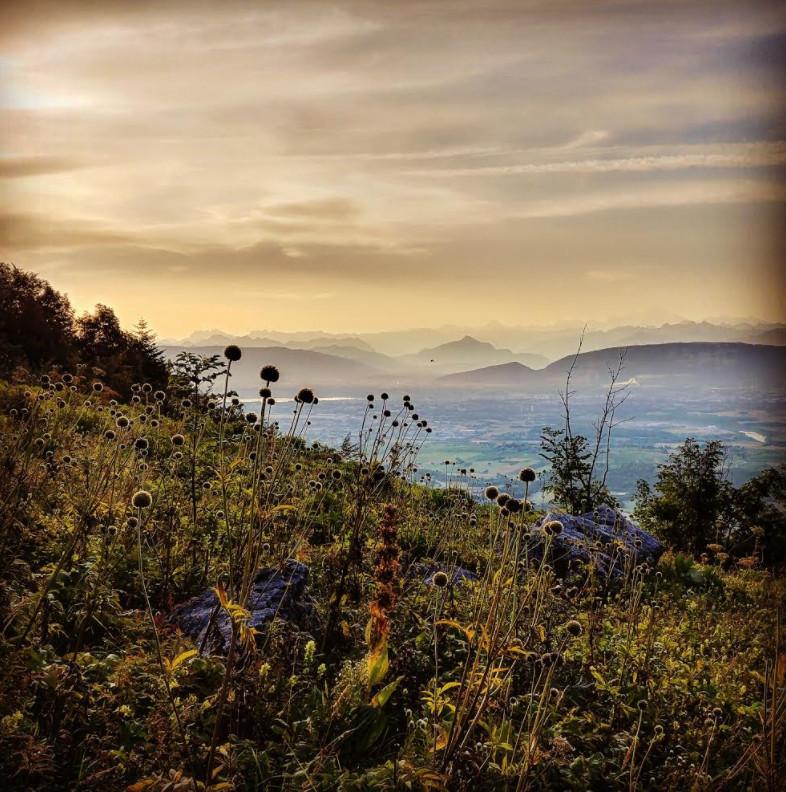 Vue sur le bassin Genevois depuis le Jura à l'aube. © Mathias Deshusses