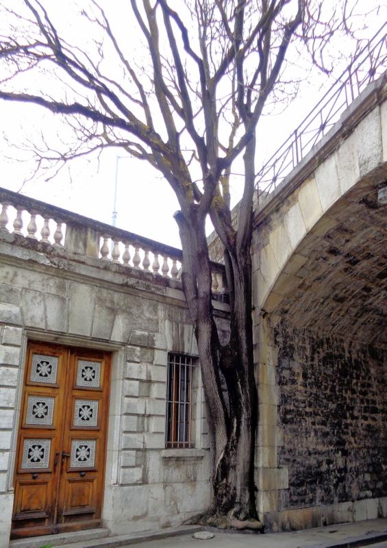 10. Un arbre qui croît malgré l'environnement hostile, contre le Pont de Saint-Léger