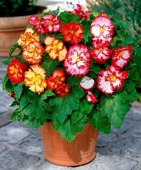 Adieu bégonias, dahlias, lys et autres rosiers par correspondance...
