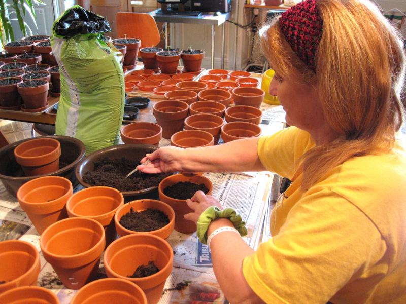 A l'Atelier d'Animation de Beau-Séjour, on semait des graines de tomates-cerises de chez Bakker, avec les patients