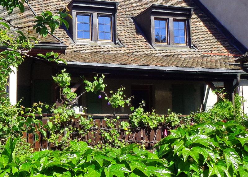 La vigne pousse jusque contre le balcon