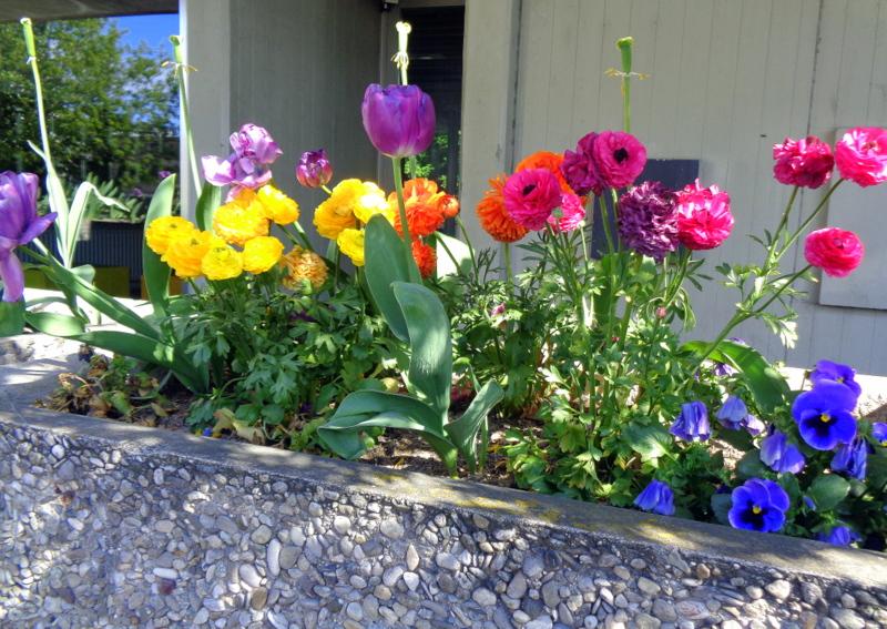 Magnifique bac fleuri sur une terrasse